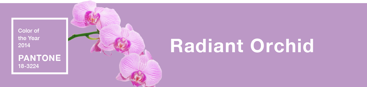 Radiant Orchid Banner